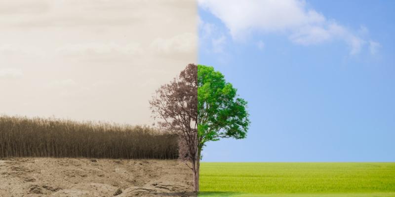 Greenwashing | MTDMFG